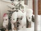 Lumised päkapikud